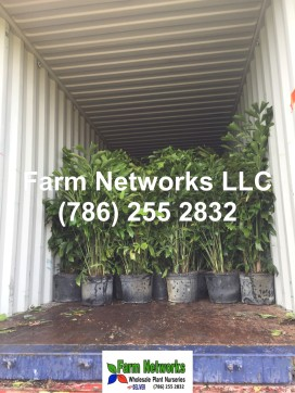 Bahamas Tropical Plant Exporters