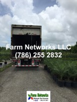 Florida foliage growers exporters