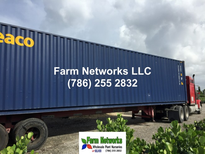 Florida foliage plant exporters