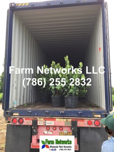 Florida Tropical Plants Exporters