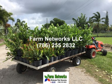 Plant Exporters in South Florida